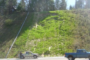 Revegetated Slope